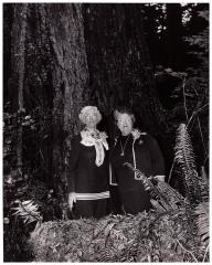 Memorial Grove 1971